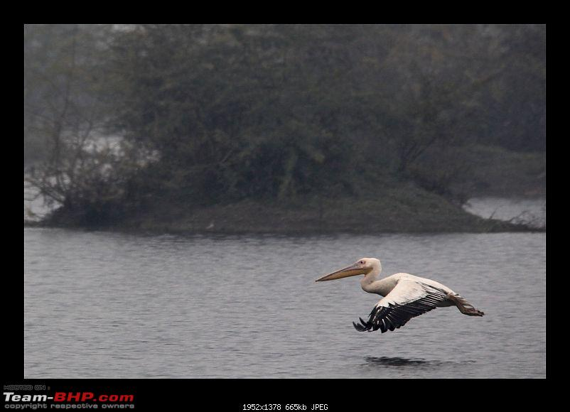 Keoladeo National Park - Bharatpur-0074.jpg