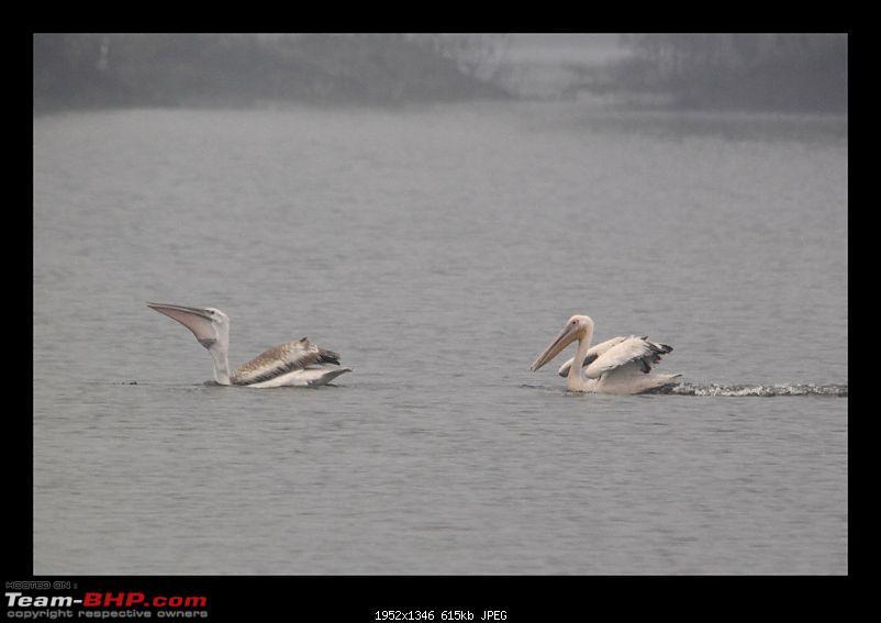 Keoladeo National Park - Bharatpur-0076.jpg