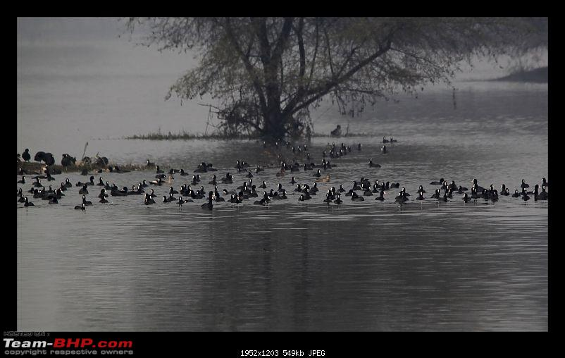 Keoladeo National Park - Bharatpur-0079.jpg