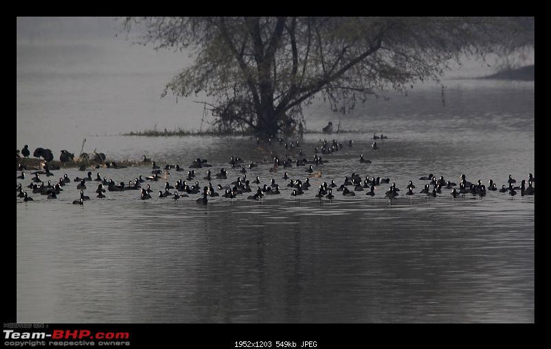 Keoladeo National Park - Bharatpur-0079.jpg