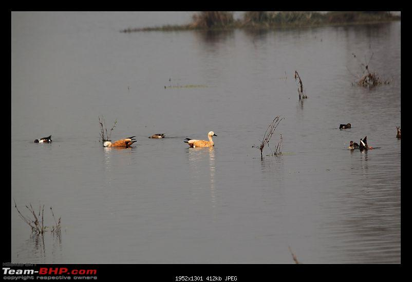 Keoladeo National Park - Bharatpur-0083.jpg