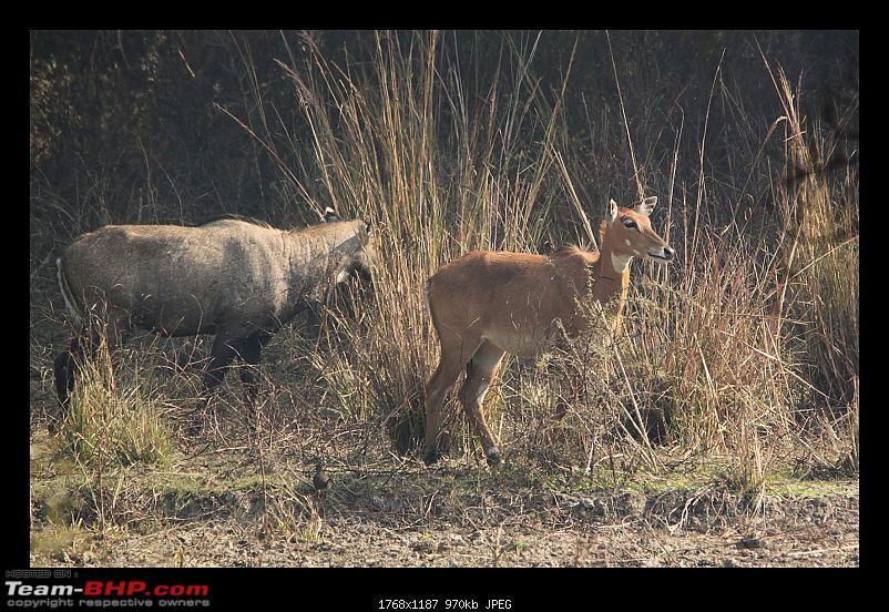 Keoladeo National Park - Bharatpur-0093.jpg