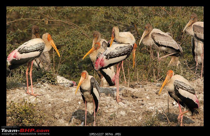 Keoladeo National Park - Bharatpur-0106.jpg