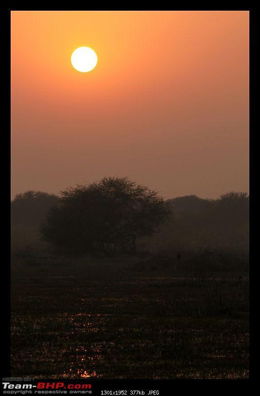 Keoladeo National Park - Bharatpur-0128.jpg