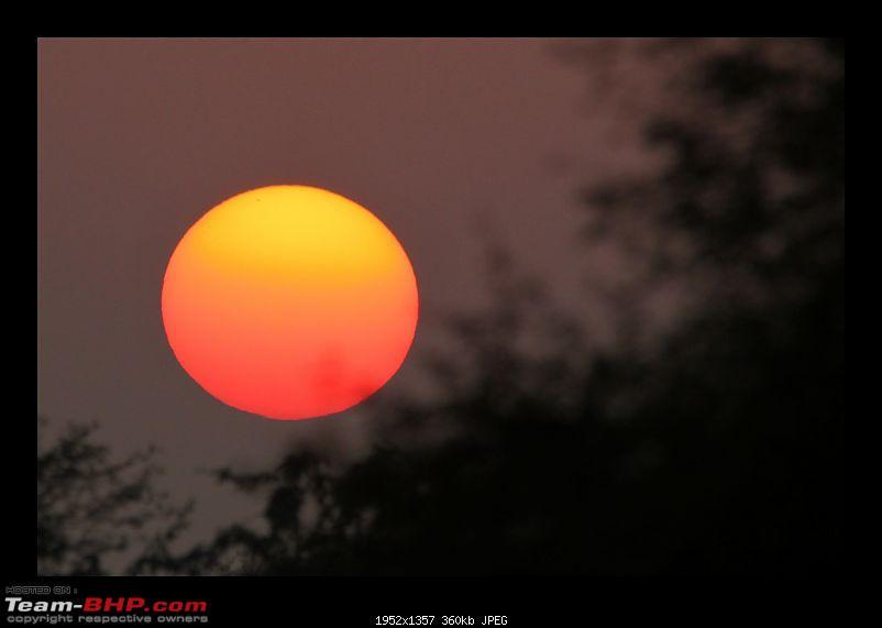 Keoladeo National Park - Bharatpur-0131.jpg