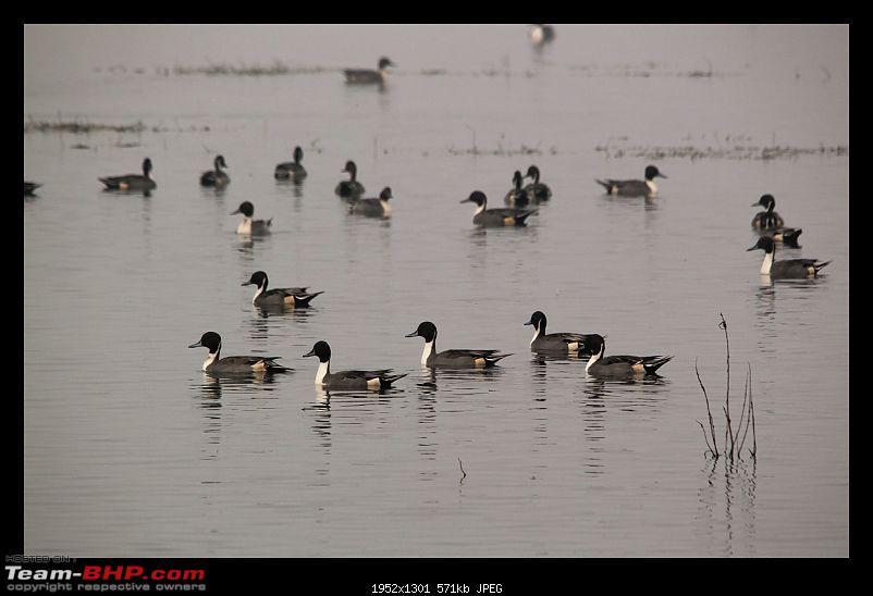 Keoladeo National Park - Bharatpur-0145.jpg