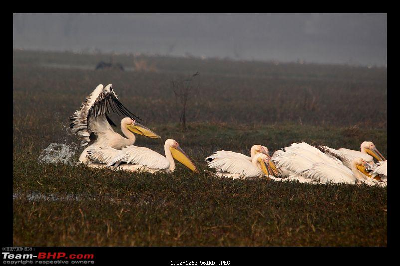 Keoladeo National Park - Bharatpur-0154.jpg
