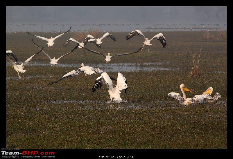 Keoladeo National Park - Bharatpur-0163.jpg