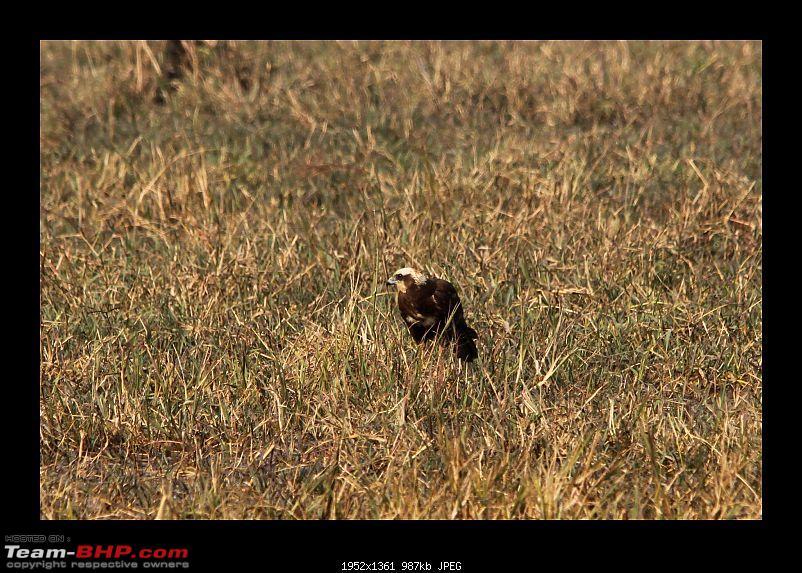 Keoladeo National Park - Bharatpur-0166.jpg