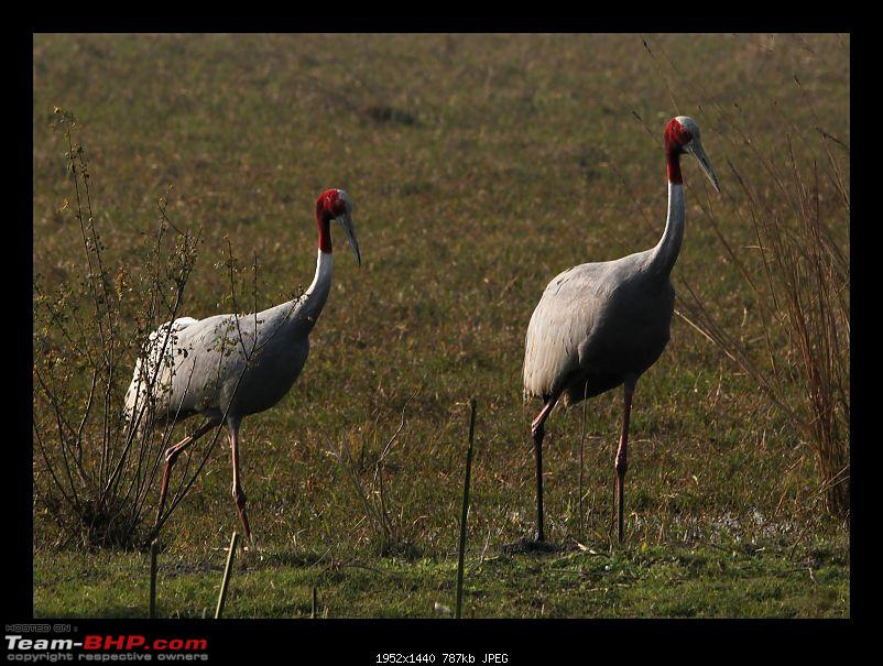 Keoladeo National Park - Bharatpur-0187.jpg