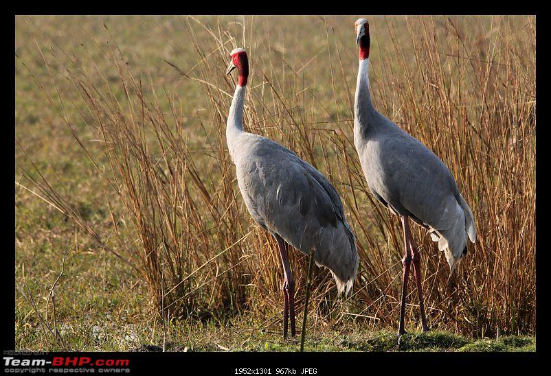 Keoladeo National Park - Bharatpur-0192.jpg