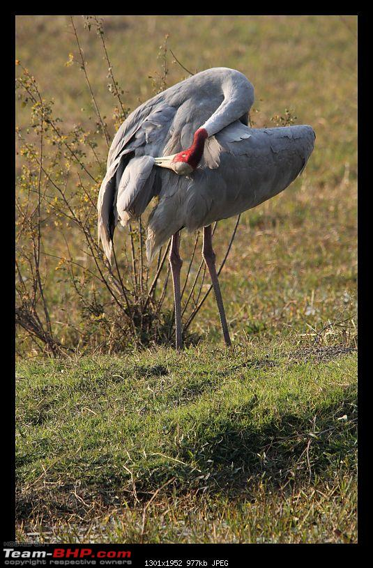 Keoladeo National Park - Bharatpur-0199.jpg