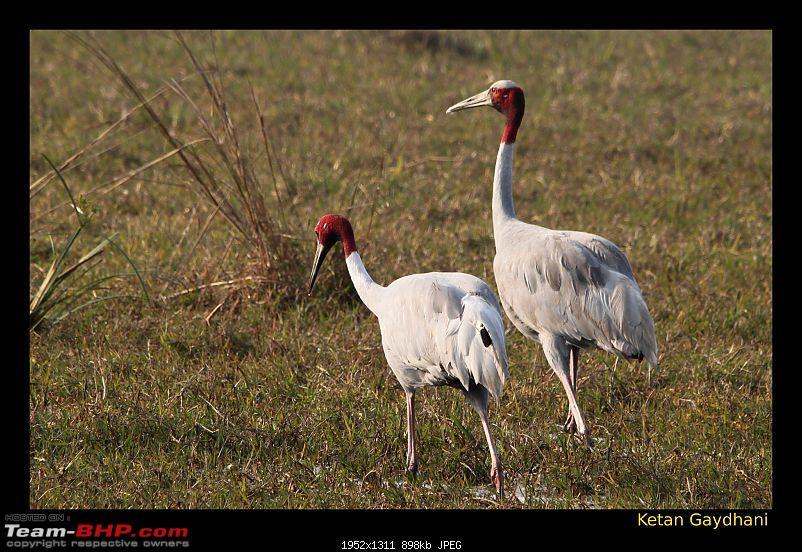 Keoladeo National Park - Bharatpur-0200.jpg
