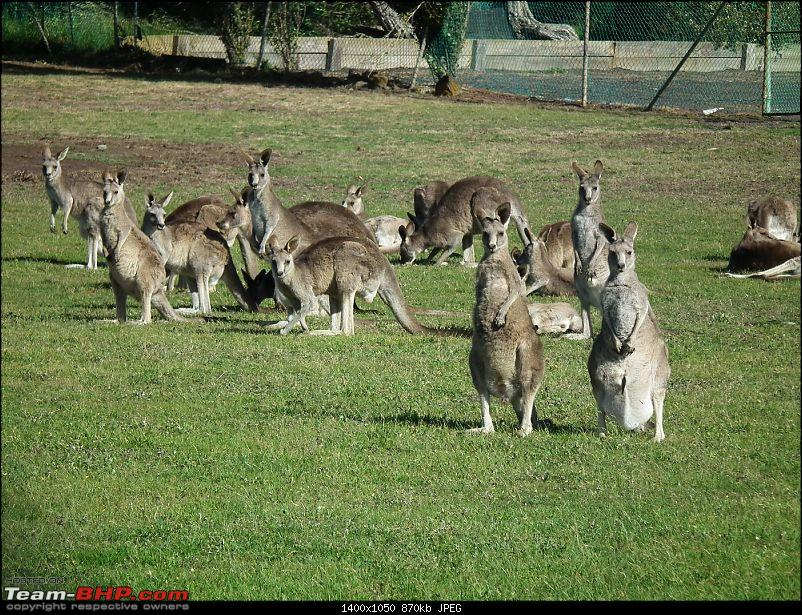There's quite nothing like Australia - A Travelogue-14.jpg