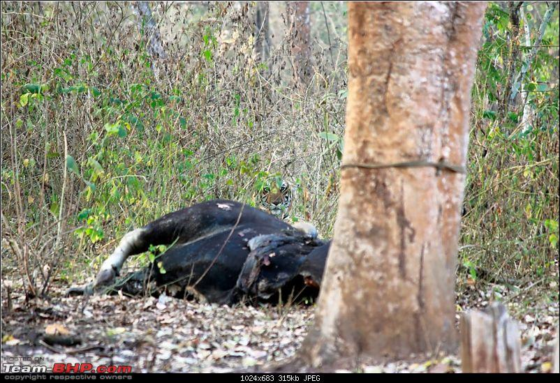 Answered the call of the wild - Kabini-kill-1.jpg