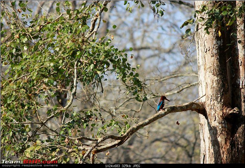 Answered the call of the wild - Kabini-kingfisher.jpg
