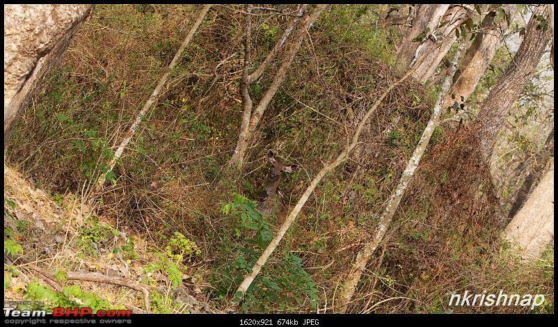 A tale of 2 Lineas in the Wilderness-_mg_4708-copy.jpg