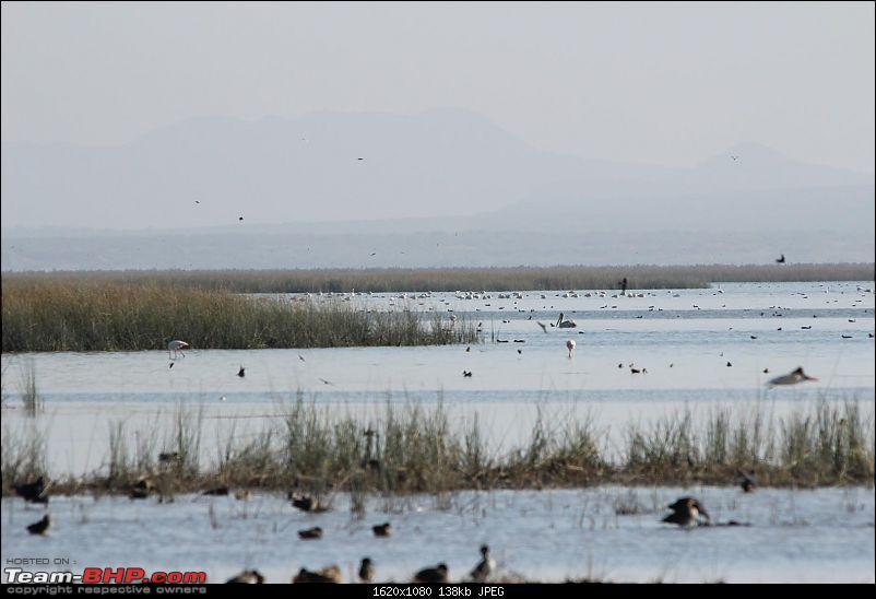 Discover Gujarat : Great Rann of Kutch, Bani Grass Land & Bhuj-img_0946.jpg