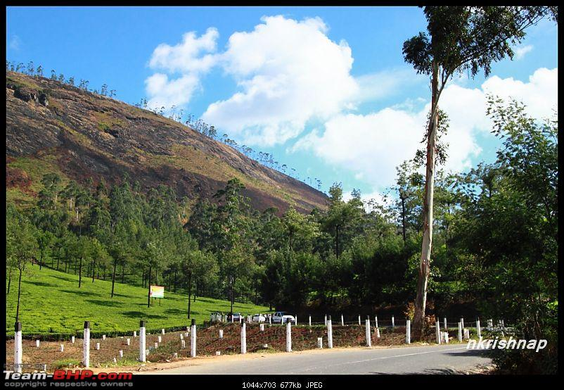 Munnar - February 2013 Edition-img_0804-copy.jpg