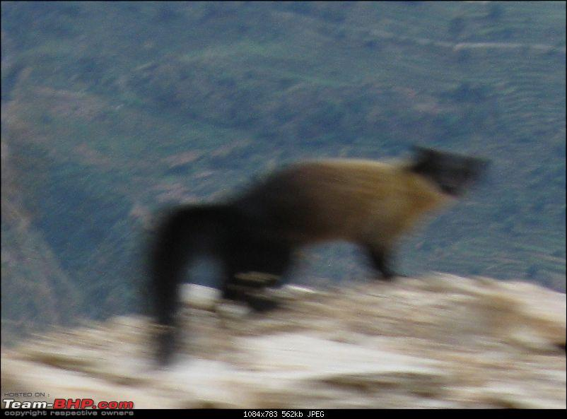 Gurgaon - Palampur - Gurgaon-mysterious_animal.jpg
