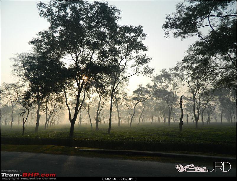 A trip to Dehing Patkai Rain Forest, Dibrugarh (Assam)-jrd9.jpg