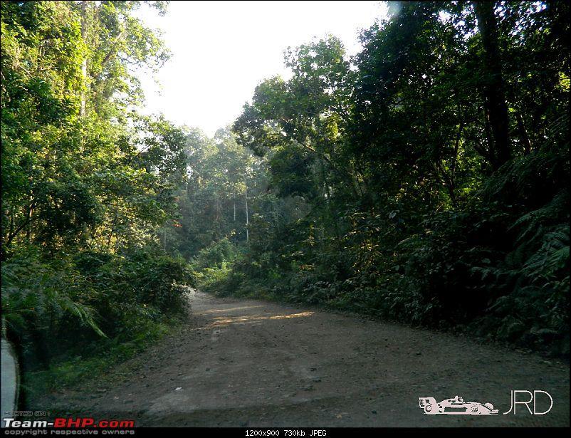 A trip to Dehing Patkai Rain Forest, Dibrugarh (Assam)-jrd7.jpg