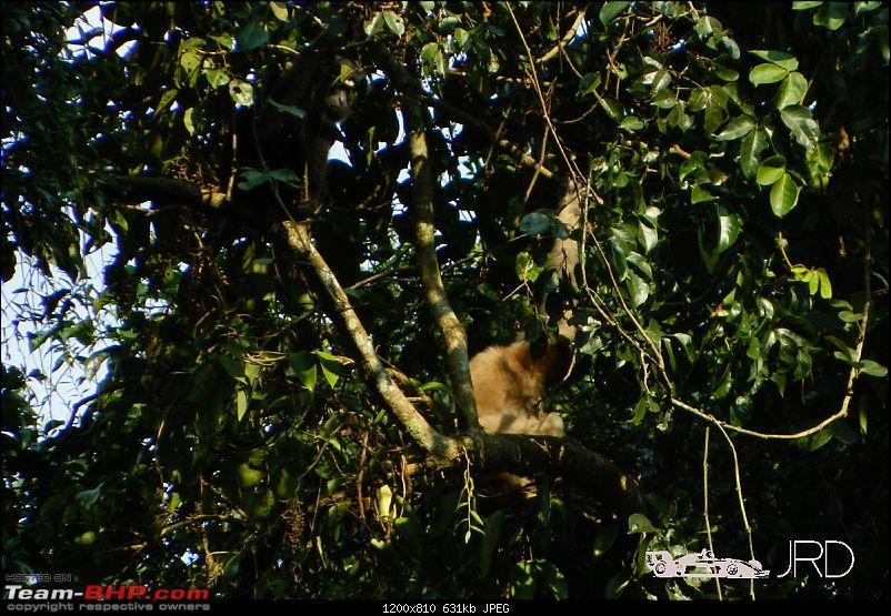 A trip to Dehing Patkai Rain Forest, Dibrugarh (Assam)-gibon4.jpg
