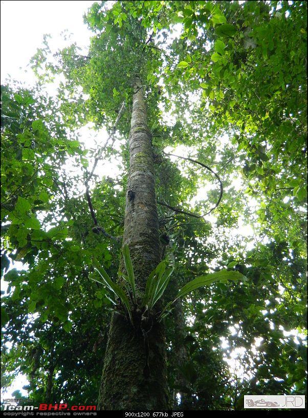 A trip to Dehing Patkai Rain Forest, Dibrugarh (Assam)-jrd1001.jpg