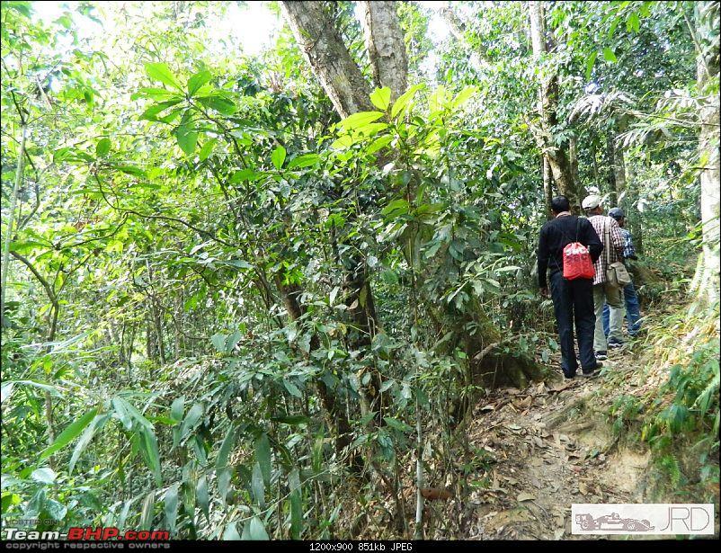 A trip to Dehing Patkai Rain Forest, Dibrugarh (Assam)-jrd1005.jpg