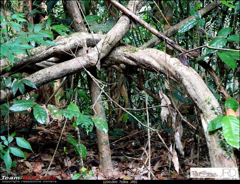 A trip to Dehing Patkai Rain Forest, Dibrugarh (Assam)-jrd1027.jpg