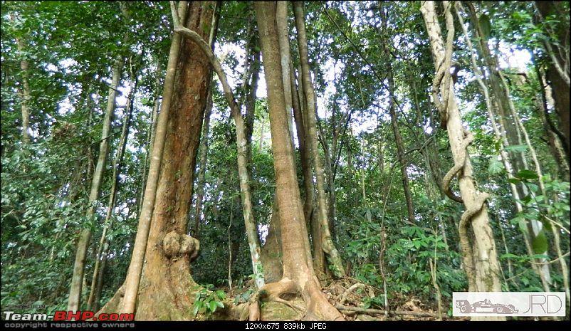 A trip to Dehing Patkai Rain Forest, Dibrugarh (Assam)-jrd1039.jpg