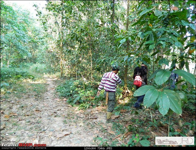 A trip to Dehing Patkai Rain Forest, Dibrugarh (Assam)-jrd1064.jpg