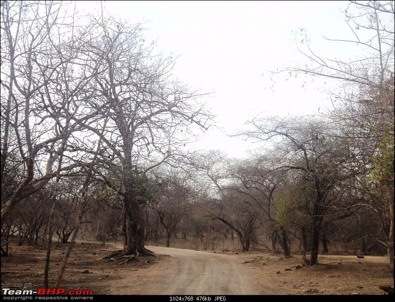 Hawk-On-Fours® (H-4®) Roadtrip: Reminiscences of Gir Forest-forestroad2.jpg
