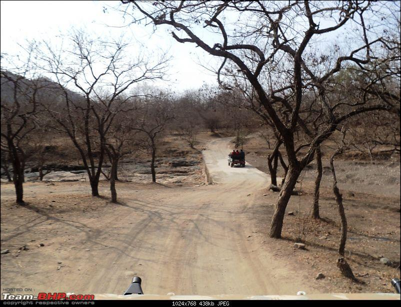 Hawk-On-Fours® (H-4®) Roadtrip: Reminiscences of Gir Forest-forestroad3.jpg