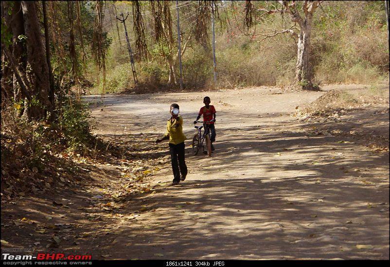 Hawk-On-Fours® (H-4®) Roadtrip: Reminiscences of Gir Forest-dsc04179k300.jpg