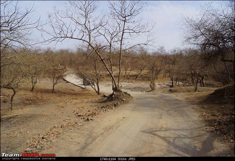 Hawk-On-Fours® (H-4®) Roadtrip: Reminiscences of Gir Forest-set1-0k300.jpg