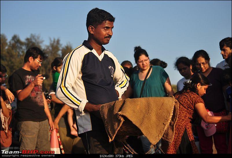 Reliving the innocence at a rustic Konkan village (Velas turtle festival)-101-dsc_1938.jpg