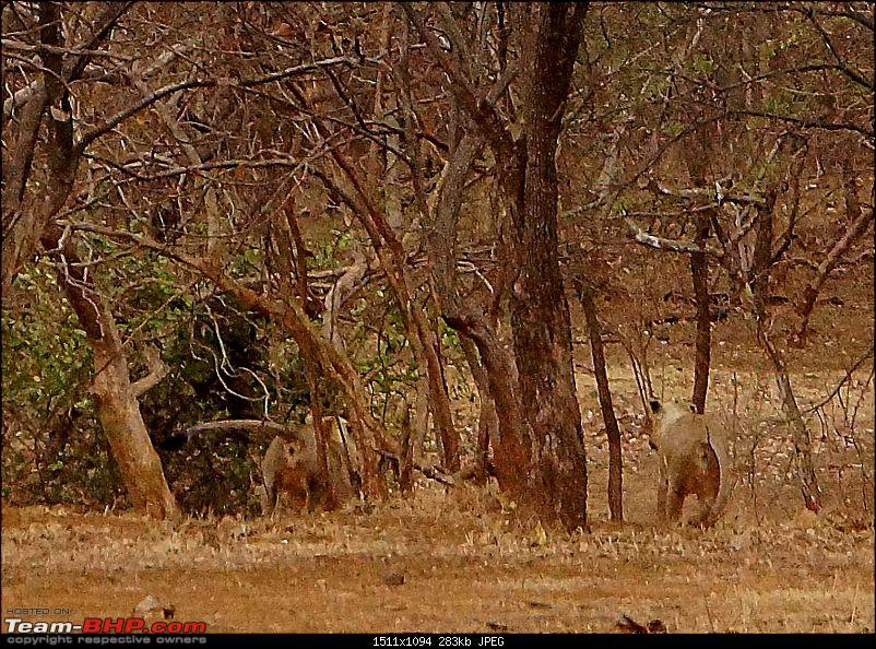 Hawk-On-Fours® (H-4®) Roadtrip: Reminiscences of Gir Forest-feed-1k300.jpg