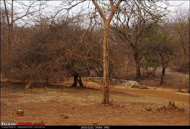 Hawk-On-Fours® (H-4®) Roadtrip: Reminiscences of Gir Forest-mom-2.jpg