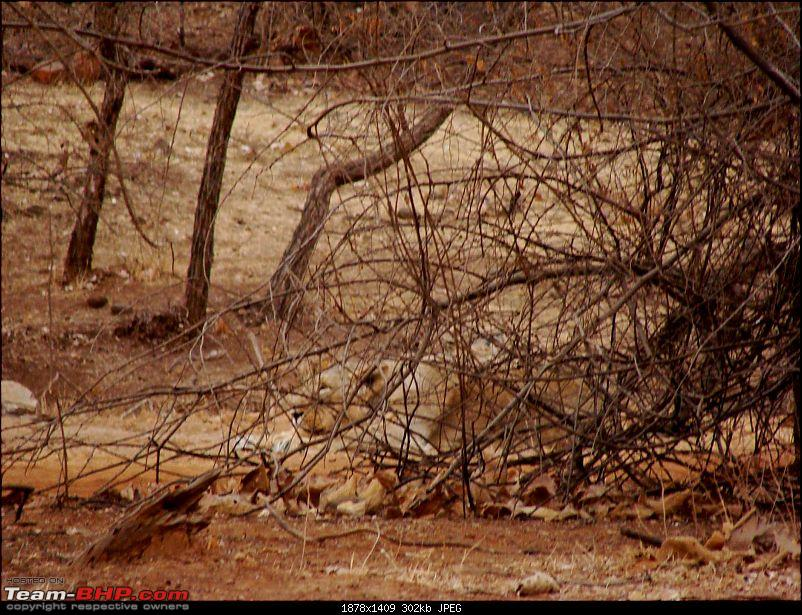 Hawk-On-Fours® (H-4®) Roadtrip: Reminiscences of Gir Forest-mom-4.jpg