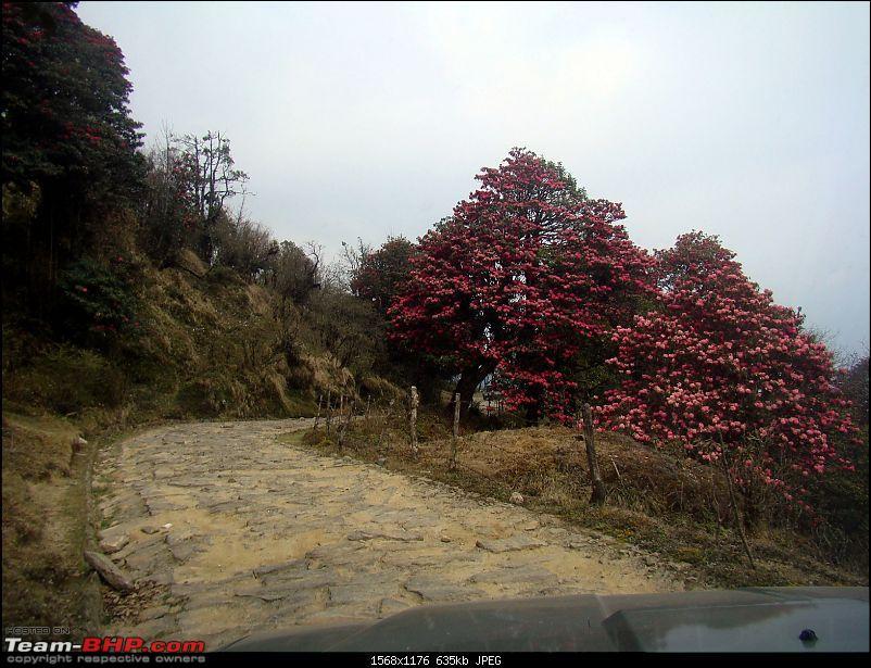 Sandakphu Phalut Kolakham - Unleashing a Mahindra Scorpio on Land Rover territory-dsc00062.jpg