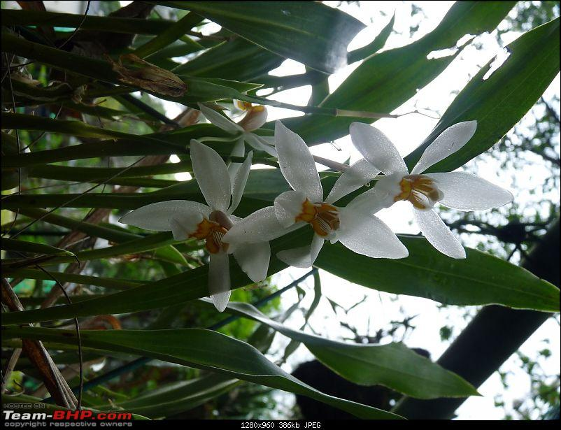A Yercaud Sojourn-orchid2.jpg