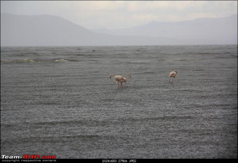 An African Safari into the Maasai Maara-flamingo.jpg