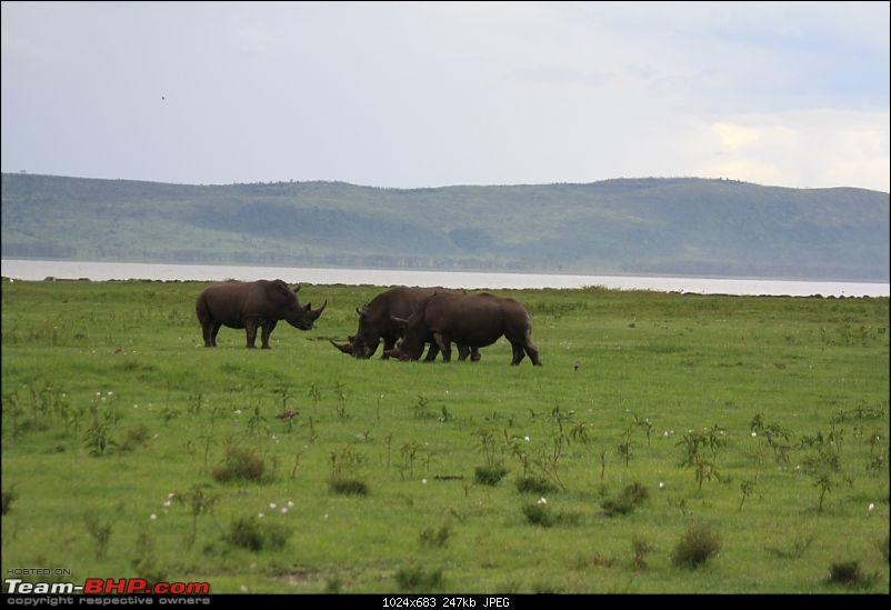An African Safari into the Maasai Maara-rhino.jpg