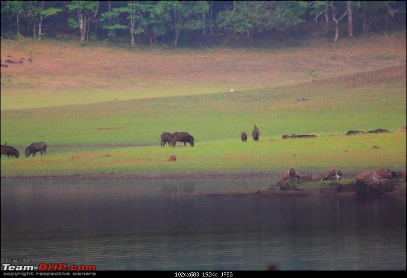 One more Wildlife Trip - Gavi, Thekkady-wildboar.jpg