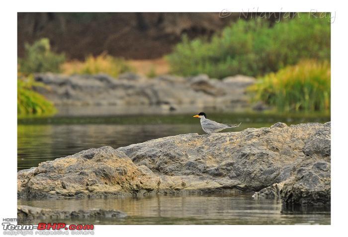 Name:  tern2.jpeg Views: 1173 Size:  270.2 KB
