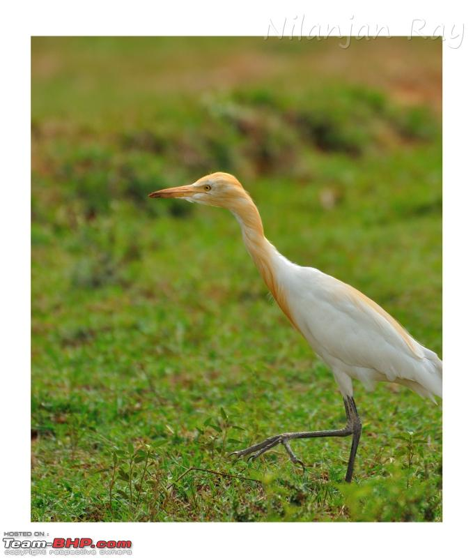 Name:  heron1.jpeg