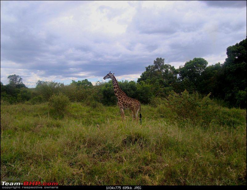 Masai Mara - A Quintessential African Safari-gif-1.jpg
