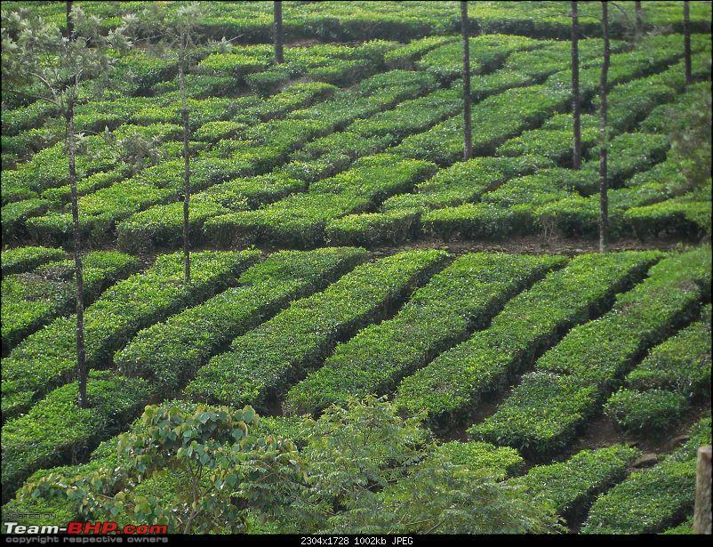 South Eastern Tamil Nadu Trip, on Summer Vacation-tea-estate.jpg