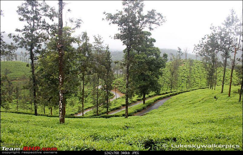Tea Gardens, Misty clouds and a bit of offroading: A weekend of fun at Sinnadorai-28.jpg
